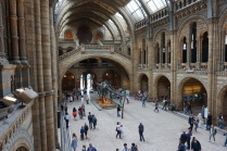 Pic 2016-0630 16 London Natural History Museum (6)