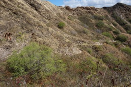 Pic 2017-0622 02 Diamond Head (25)
