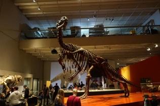 Pic 2017-0707 Brisbane 01 QLD Museum (11)