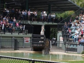 Pic 2017-0709 Australia Zoo (146) edit