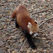Pic 2017-0709 Australia Zoo (154) edit