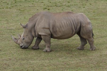 Pic 2017-0709 Australia Zoo (168)