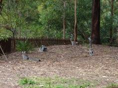 Pic 2017-0709 Australia Zoo (186) edit