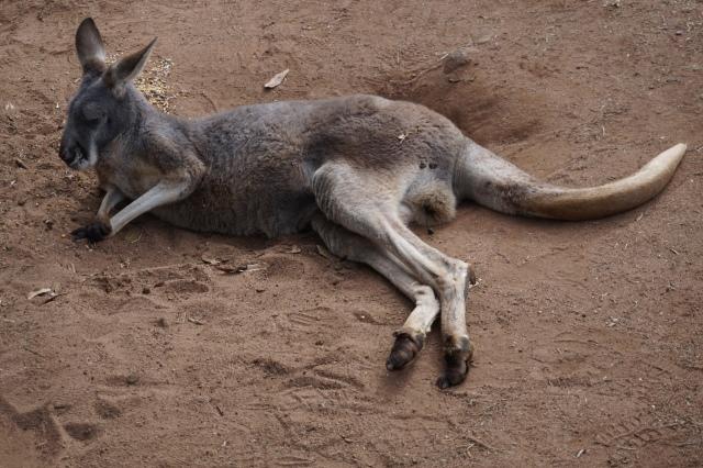 Pic 2017-0709 Australia Zoo (196)