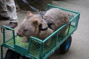 Pic 2017-0709 Australia Zoo (205)