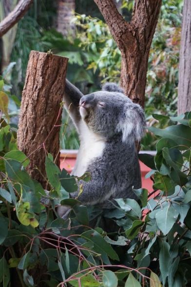 Pic 2017-0709 Australia Zoo (215)