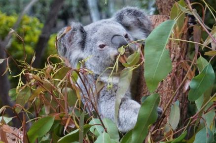 Pic 2017-0709 Australia Zoo (225)