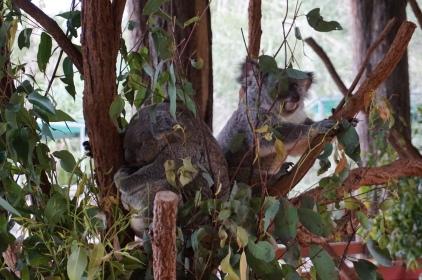Pic 2017-0709 Australia Zoo (246)