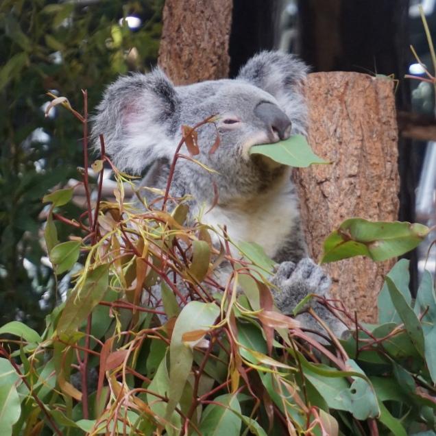 Pic 2017-0709 Australia Zoo (248) edit