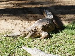Pic 2017-0709 Australia Zoo (35) edit