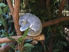 Pic 2017-0709 Australia Zoo (4)