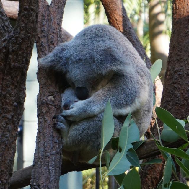 Pic 2017-0709 Australia Zoo (61) edit