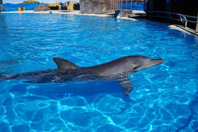 Pic 2017-0808 01 Dolphin Marine Magic (256)