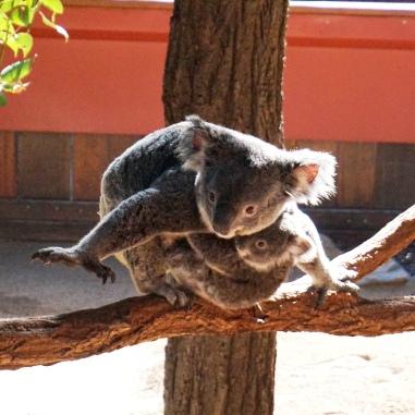 Pic 2017-0826 Australia Zoo (73) edit