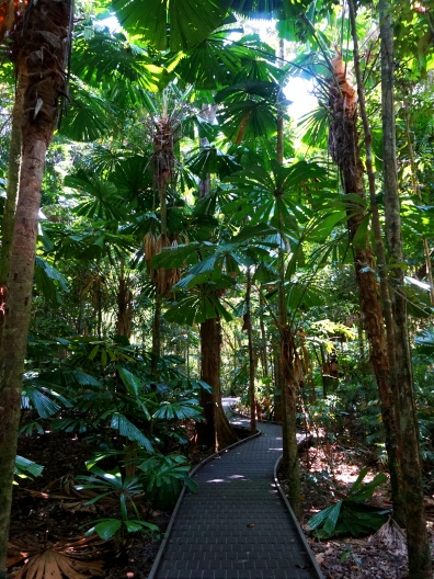 Pic 2017-1002 03 Daintree Dubuji Trail (8) Edit
