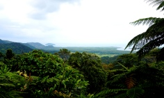 Pic 2017-1002 09 Daintree (4) Edit