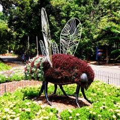 Pic 2017-1218 04 Royal Botanical Garden (97) Edit