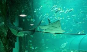 Pic 2017-1224 03 SeaLife Aquarium (15) Edit
