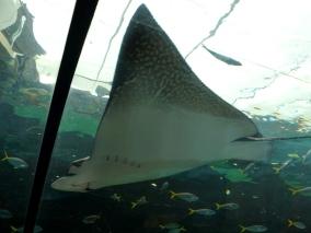 Pic 2017-1224 03 SeaLife Aquarium (43) Edit
