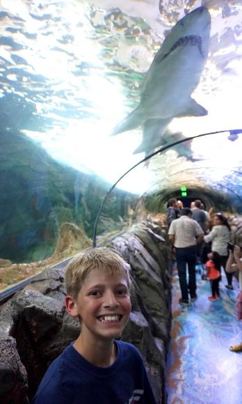 Pic 2017-1224 03 SeaLife Aquarium (62) Edit