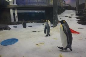 Pic 2017-1224 03 SeaLife Aquarium (80)