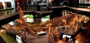 Pic 2018-0115 02 Melbourne Museum (33) Edit