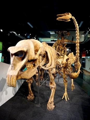 Pic 2018-0115 02 Melbourne Museum (6) Edit