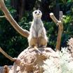 Pic 2018-0124 01 Melbourne Zoo (141) Edit