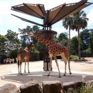 Pic 2018-0124 01 Melbourne Zoo (21) Edit