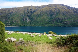 Pic 2018-0224 01 Lake Wakatipu (18) Edit
