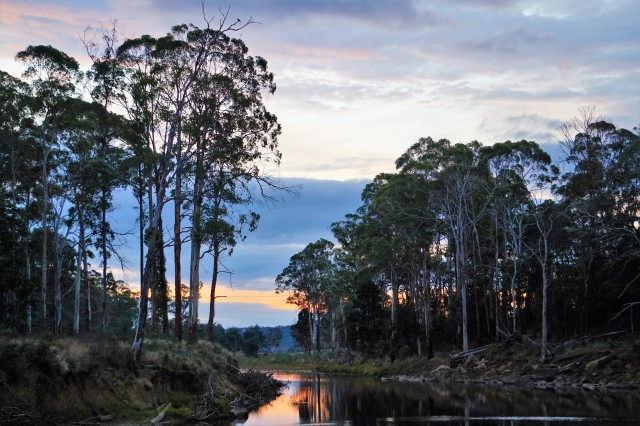 Pic 2018-0407 08 Warrawee Forest Platypus (27) Edit