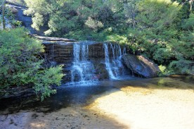 Pic 2018-0424 03 Blue Mtns Wentworth Falls Track (14) Edit