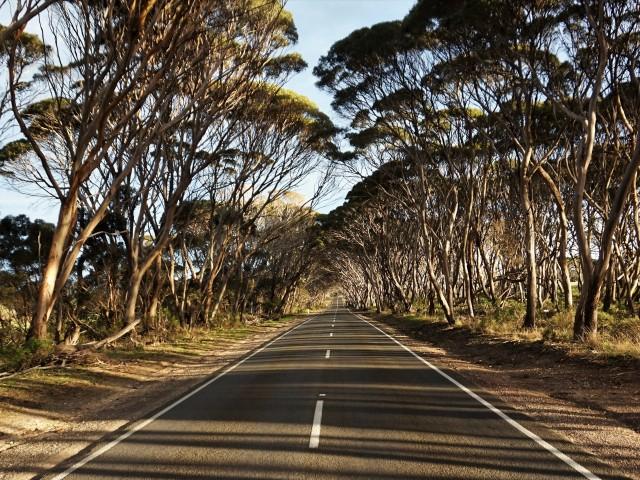 Pic 2018-0702 09 Kangaroo Island (3) edit